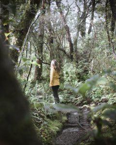 Wanderungen am Milford Sound