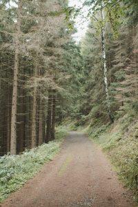 Grüne Wege im Nationalpark Harz