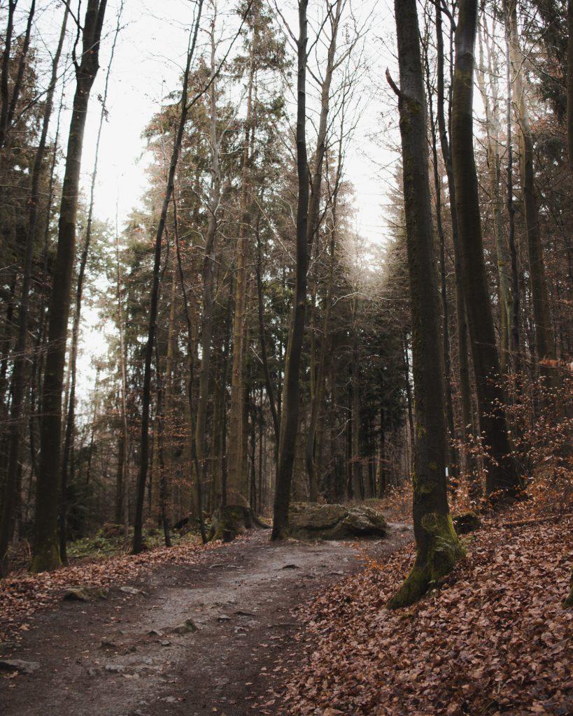 Weg zu den Bruchhauser Steinen im Sauerland